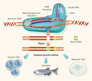 CRISPR-Cas9 genome editing can be used to manipulate vector genomes